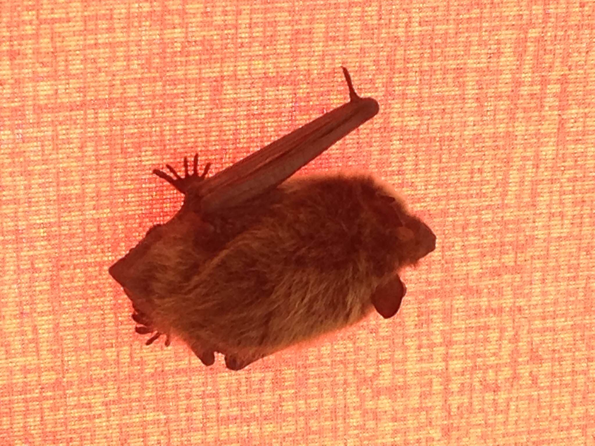 Bat Removal Service Bat Removal Iowa Affordable